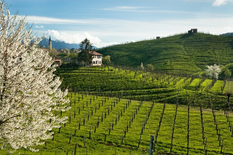 Valdobbiadene-Foto_primavera_homepage.jpg