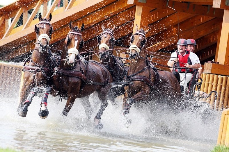 Equitazione-Attacchi.jpg