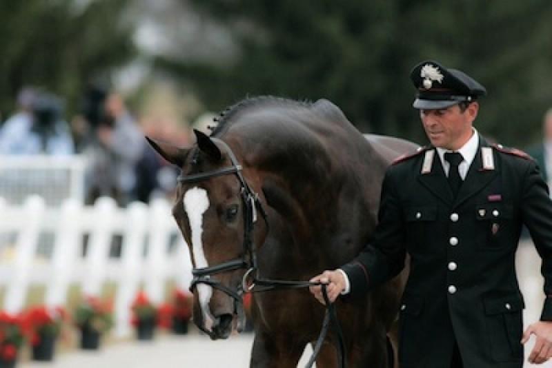 Equitazione-Stefano-Brecciaroli.jpg