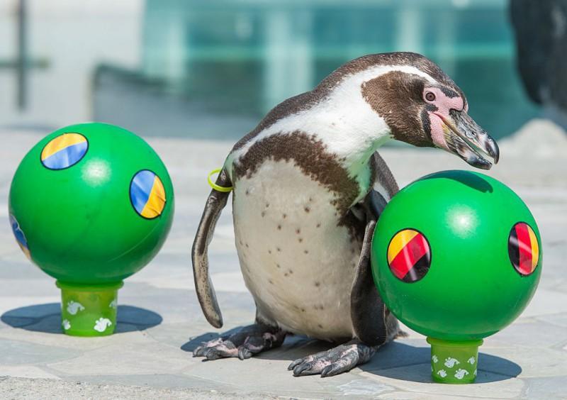Pinguino-Flocke-europei-calcio-2016-foto-twitter-uefa-2016.jpg