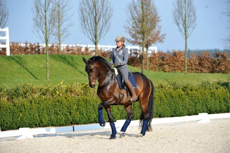 Equitazione-Dorothée-Schneider.jpg