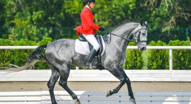 Equitazione, Tatiana Miloserdova non è eleggibile per rappresentare l'Italia alle Olimpiadi nel dressage