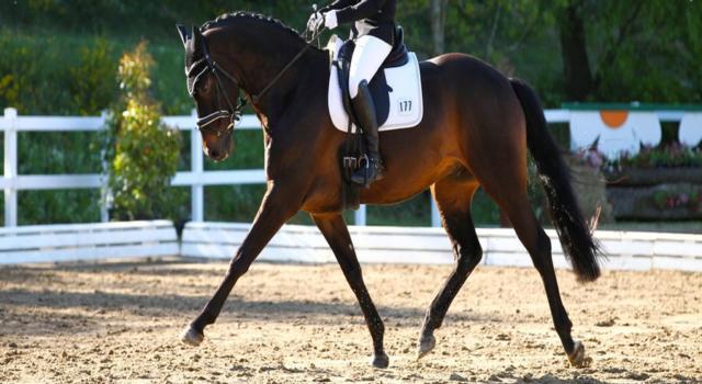 Equitazione, Nations Cup Dressage Compiegne 2021: la Svezia vince e balza in vetta alla graduatoria